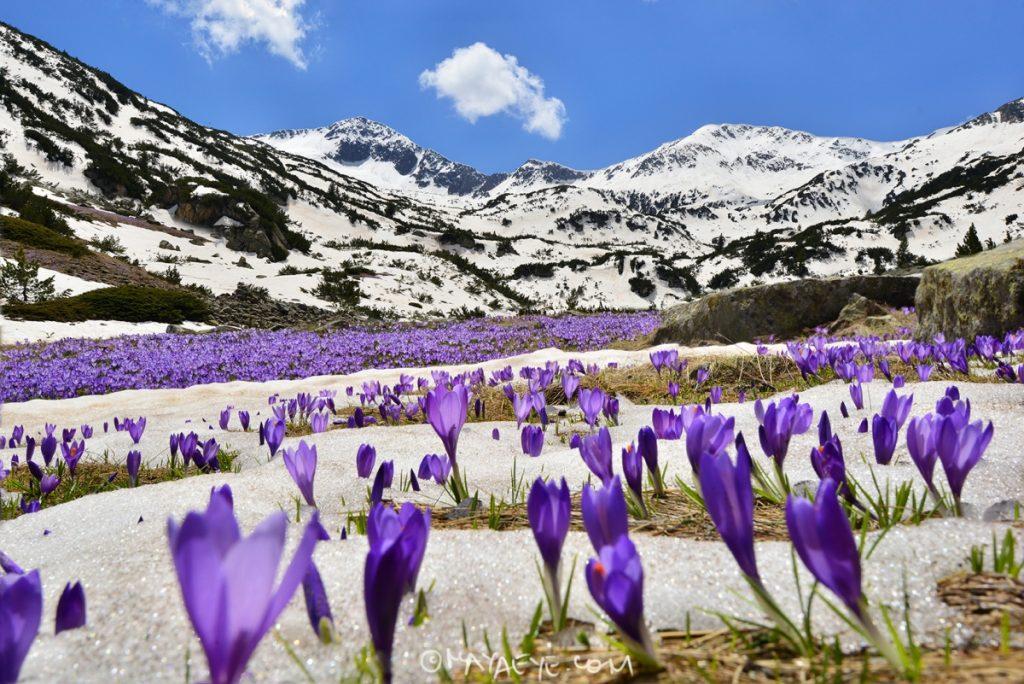 СПА в Пирин планина